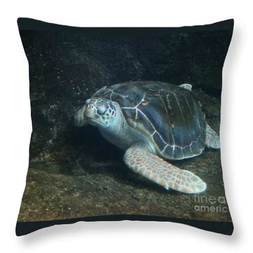 Turtle Throw Pillow featuring the photograph Lonely Sea Turtle by Dawn Downour