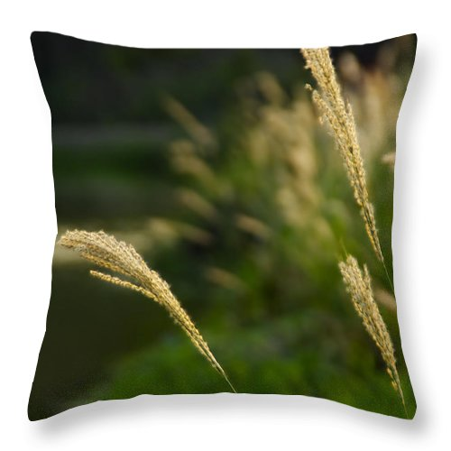 Spikes Throw Pillow featuring the photograph Lonely Spikes by Bibi Rojas