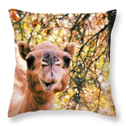 Camel Throw Pillow featuring the photograph Look At Me by Douglas Barnard