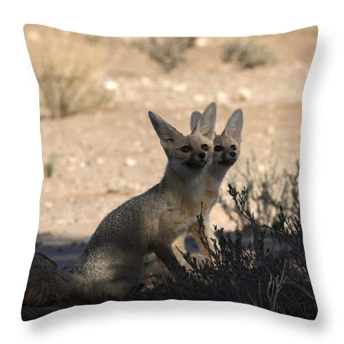 Cape Throw Pillow featuring the photograph Look At Those Flyers by Hannes Rossouw