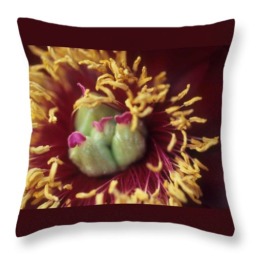 Flower Throw Pillow featuring the photograph Look Closely by Laurie Paci
