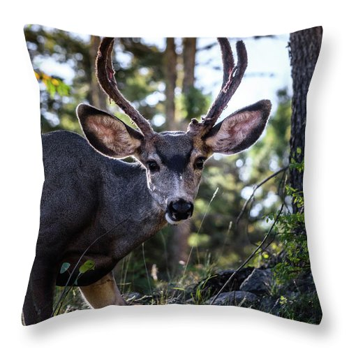 Look Into My Eyes Throw Pillow featuring the photograph Look Into My Eyes by Debra Martz