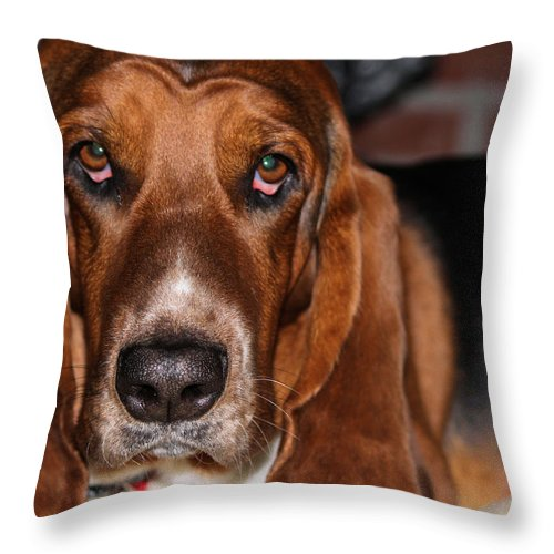 Basset Throw Pillow featuring the photograph Look Into My Eyes by Gary Wilson