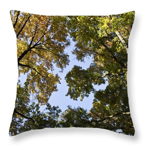 Fall Throw Pillow featuring the photograph Look Up by Teresa Mucha