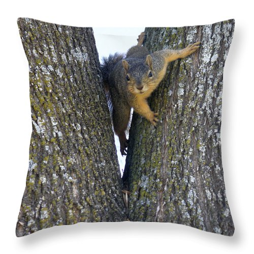 Nature Throw Pillow featuring the photograph Looking Back by Lucyna A M Green