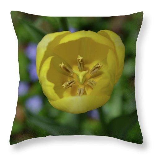 Tulip Throw Pillow featuring the photograph Looking Down Into The Inside Of A Yellow Tulip by DejaVu Designs