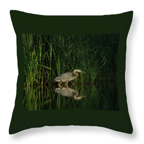Animals Throw Pillow featuring the photograph Looking For Breakfast by Ernie Echols