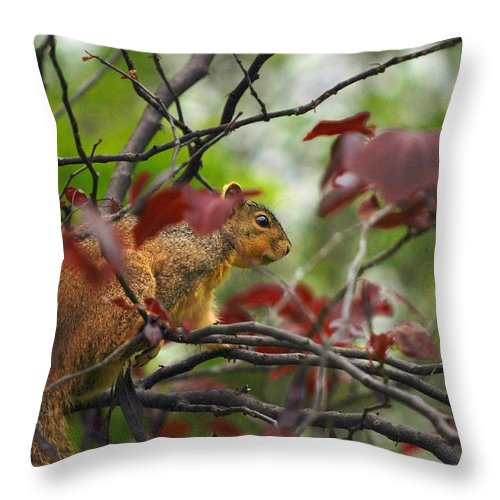 Squirrels Throw Pillow featuring the photograph Looking For Love by Donna Shahan