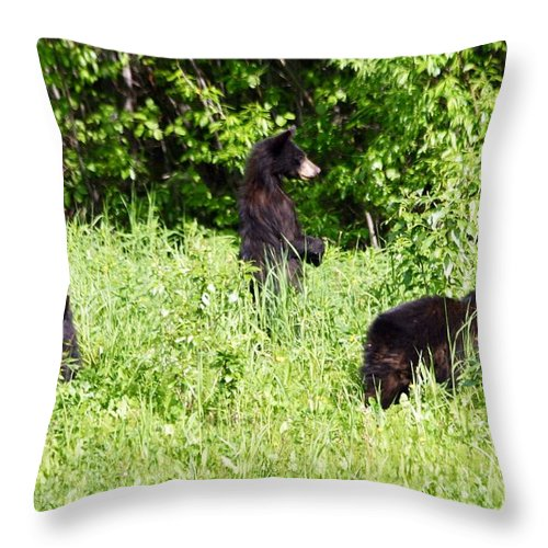 Cubs Throw Pillow featuring the photograph Looking For Mom by Donna Cain