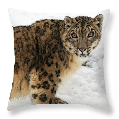 Amur Leopard Throw Pillow featuring the photograph Looking Into Your Soul by Dan Orr