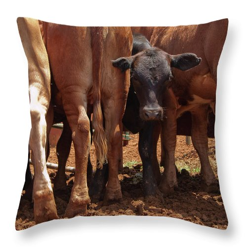 Nature Throw Pillow featuring the photograph Looking Out The Rear by Roger Mullenhour
