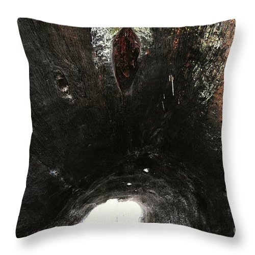Abstract Throw Pillow featuring the photograph Looking Through The Hollow Trunk Of An Ancient Fallen Sequoia In Kings Canyon California by Will Sylwester