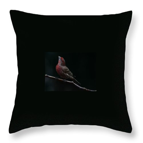 Finch Throw Pillow featuring the photograph Looking Towards Heaven by Gaby Swanson