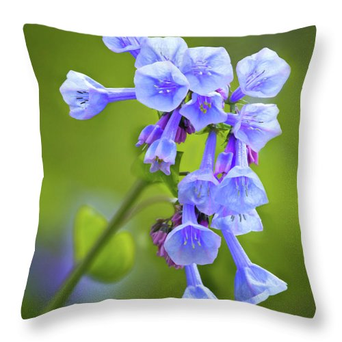 Loooking Up At Virginia Bluebells Throw Pillow featuring the photograph Looking Up At Virginia Bluebells by Carolyn Derstine