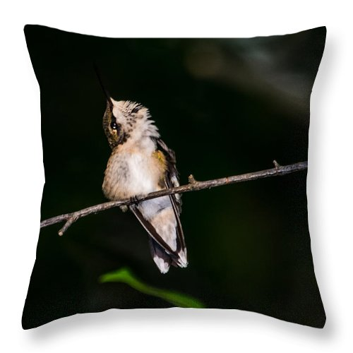 Bird Throw Pillow featuring the photograph Looking Up - Hummingbird by Alicia Collins