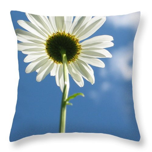 Daisy Throw Pillow featuring the photograph Looking Up by Idaho Scenic Images Linda Lantzy