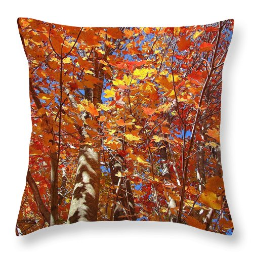Throw Pillow featuring the photograph Looking Up by Luciana Seymour