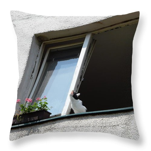 Cat Throw Pillow featuring the photograph Looking Up by Valerie Ornstein