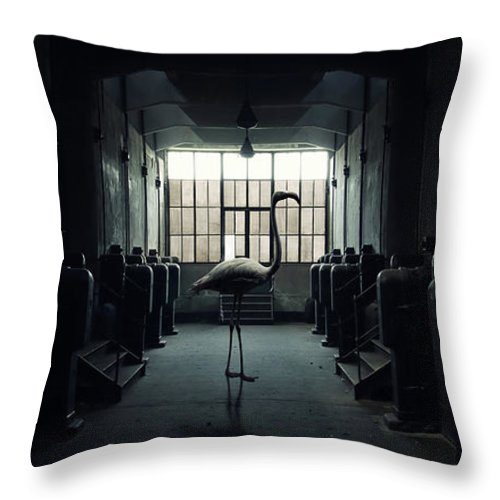 Light Throw Pillow featuring the photograph Lost Animals - Series Nr.1 by Zoltan Toth