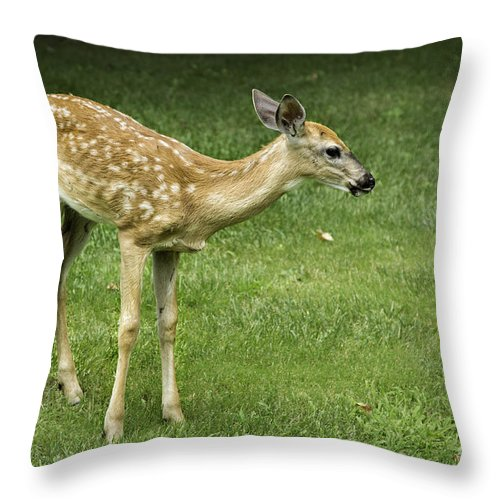 Animals Throw Pillow featuring the photograph Lost Fawn by Timothy Hacker