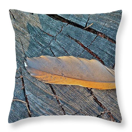 Bird Throw Pillow featuring the photograph Lost Feather by Diana Hatcher