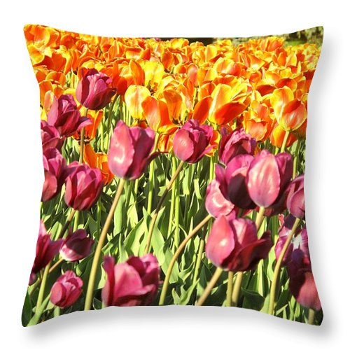 Tulips Throw Pillow featuring the photograph Lots Of Tulips by Ian MacDonald