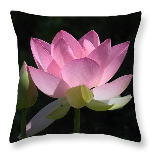 : Throw Pillow featuring the photograph Lotus Bud--snuggle Bud Dl005 by Gerry Gantt