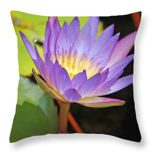 Lotus Flower Throw Pillow featuring the photograph Lotus Flower by Donna Bentley