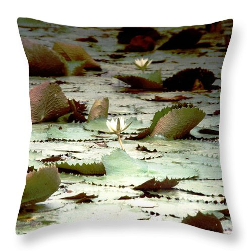 Lotus Throw Pillow featuring the photograph Lotus Fower by Luciano Comba