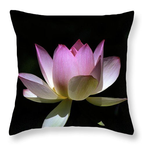 Nature Throw Pillow featuring the photograph Lotus--purity 24o by Gerry Gantt