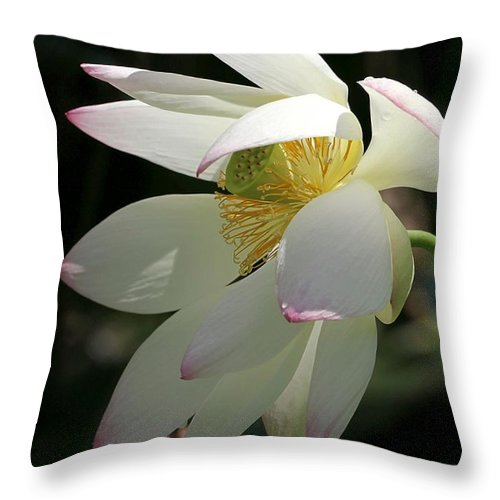 Lotus Throw Pillow featuring the photograph Lotus Under Cover by Sabrina L Ryan