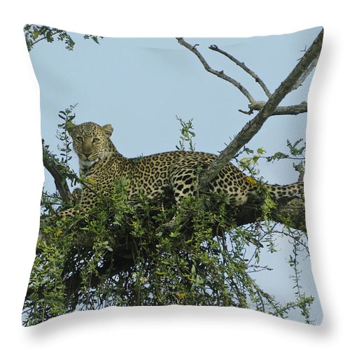 Africa Throw Pillow featuring the photograph Lounging Leopard by Michele Burgess