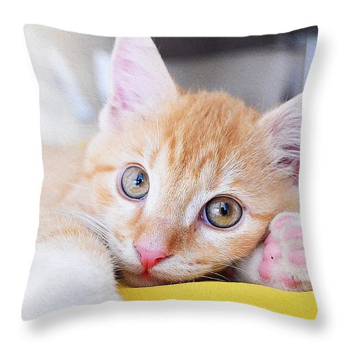 Cat Art Throw Pillow featuring the painting Lovable Cat by Queso Espinosa