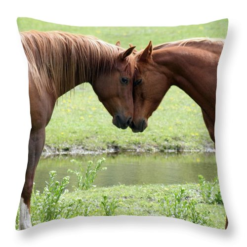 Horses Throw Pillow featuring the photograph Love by Tiffany Vest