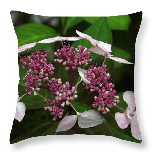 Hydrangea Throw Pillow featuring the photograph Lovely by Amanda Barcon