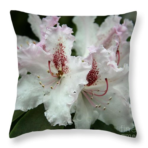 Rhododendron Throw Pillow featuring the photograph Lovely Blossoms by Christiane Schulze Art And Photography