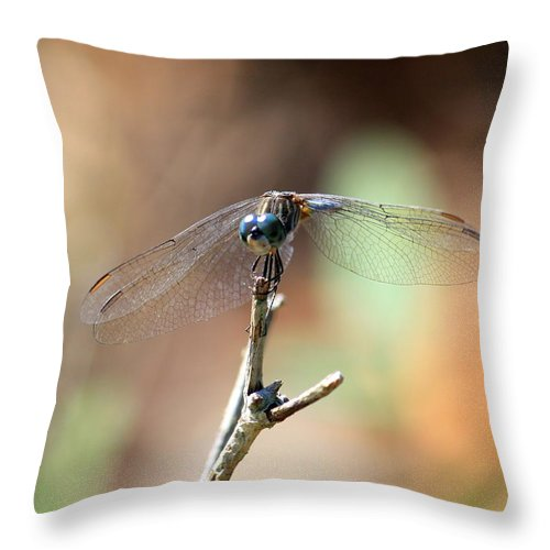 Dragonfly Throw Pillow featuring the photograph Lovely Dragonfly by Carol Groenen