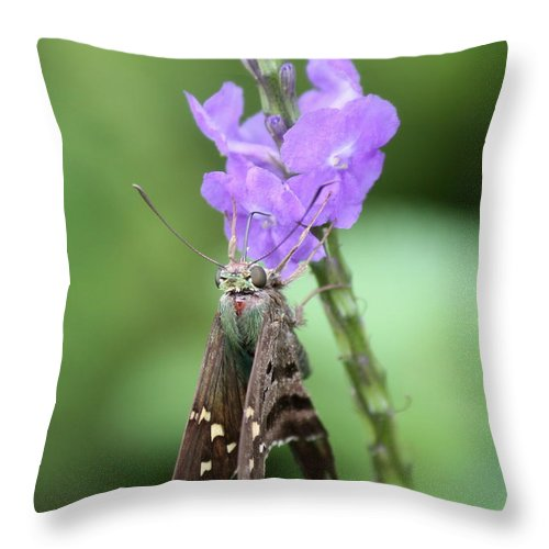 Nature Throw Pillow featuring the photograph Lovely Moth On Dainty Flower by Carol Groenen