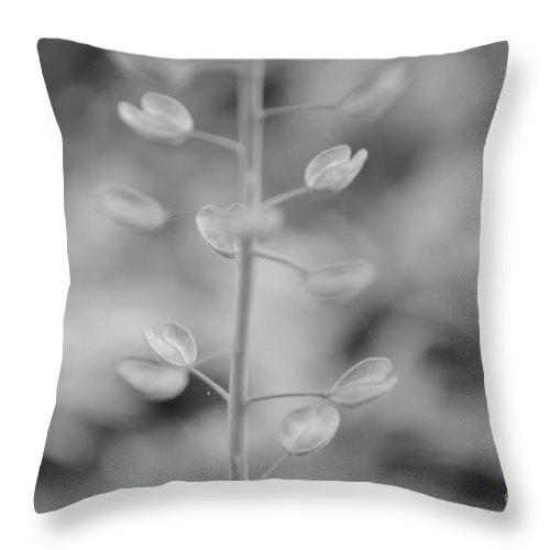 Eva Maria Nova Throw Pillow featuring the photograph Loving Greys by Eva Maria Nova