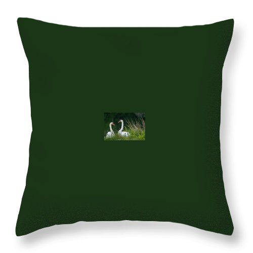 Clay Throw Pillow featuring the photograph Loving Swans by Clayton Bruster