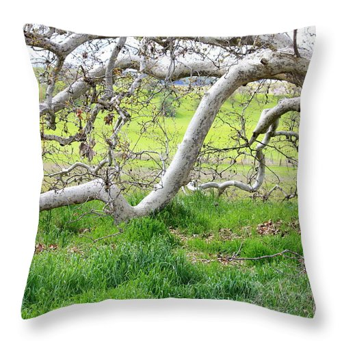 Landscape Throw Pillow featuring the photograph Low Branches On Sycamore Tree by Carol Groenen