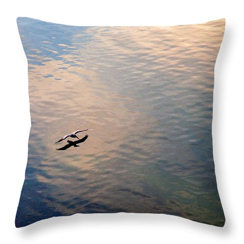 Pelican Throw Pillow featuring the photograph Low Flight by Mal Bray