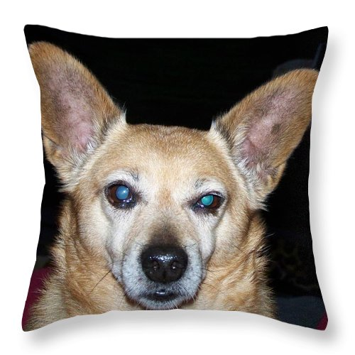 Digital Artwork Throw Pillow featuring the photograph Loyalty by Laurie Kidd