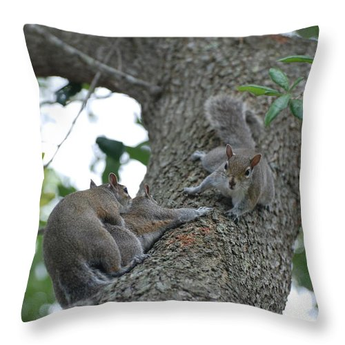Squirrel Throw Pillow featuring the photograph Luck Be A Lady by Rob Hans
