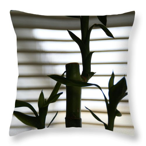 Lucky Bamboo Throw Pillow featuring the photograph Lucky Bamboo by Linda Shafer