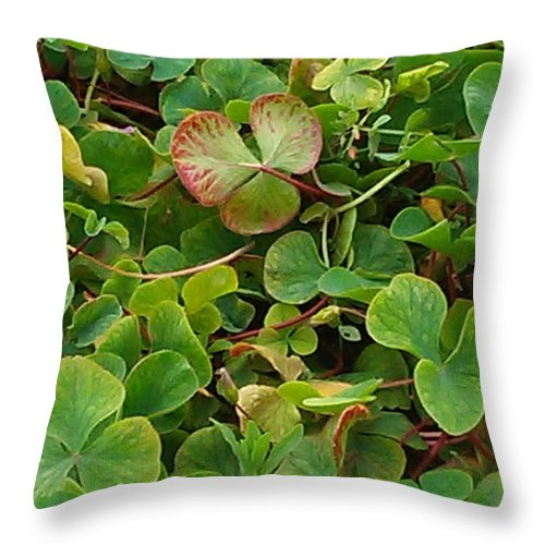 Shamrock Throw Pillow featuring the photograph Lucky Charms by Colleen Cornelius