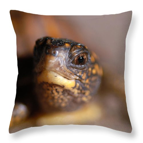 Clay Throw Pillow featuring the photograph Lucky by Clayton Bruster