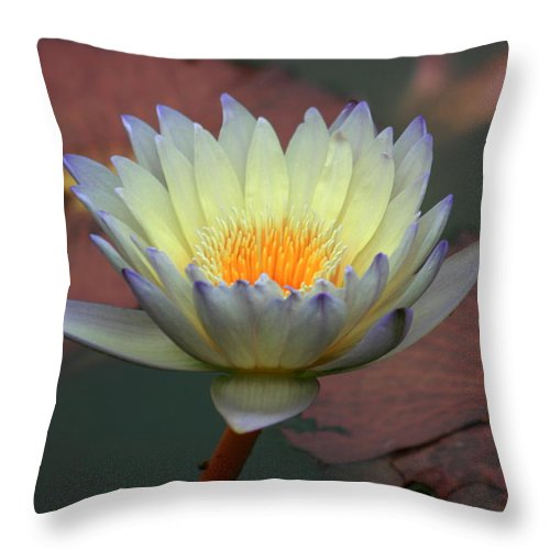 Lotus Throw Pillow featuring the photograph Luminescent Violet by David Dunham