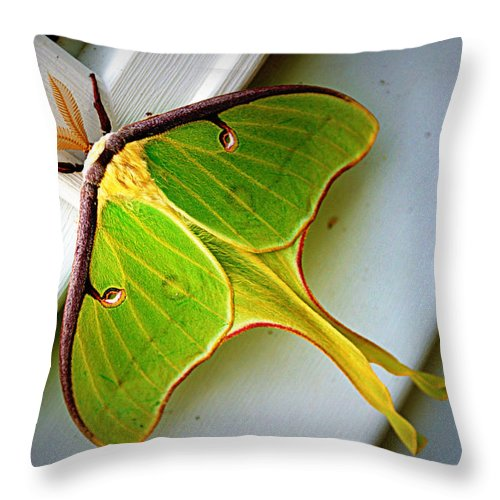 luna Moth Luna Throw Pillow featuring the photograph Luna Moth by Cricket Hackmann