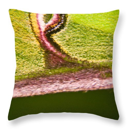 Luna Throw Pillow featuring the photograph Luna Moth Eye by Douglas Barnett